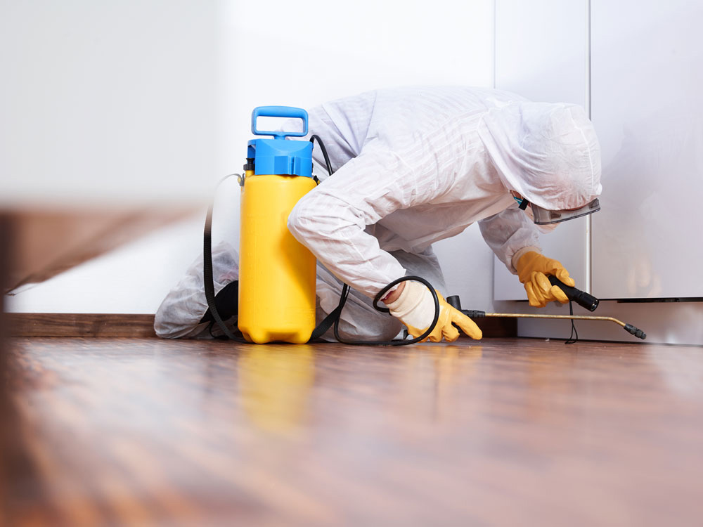 Texas Mold Removal & Remediation