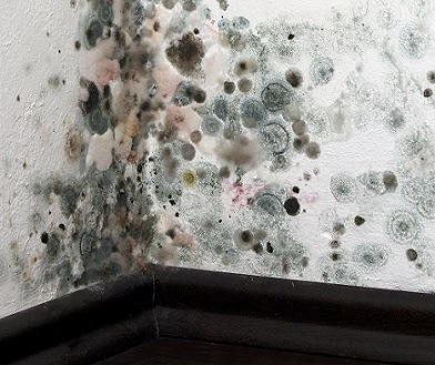 The Most Common Types Of Mold Found In Homes