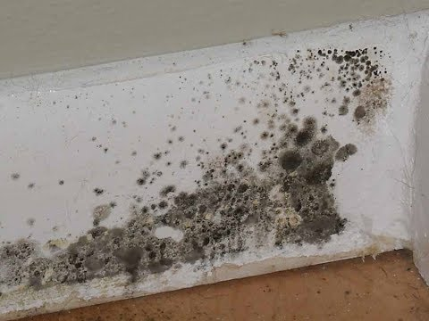 Here Are The Most Common Types Of Mold Found In Homes